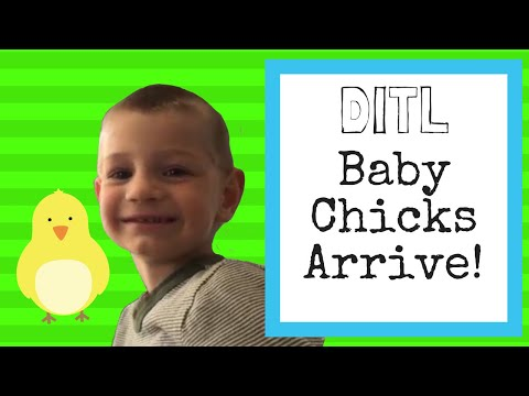 Baby Chicks Arrive in the Mail - Building A Playhouse - School Can Wait -Day in the Life with 6 Boys