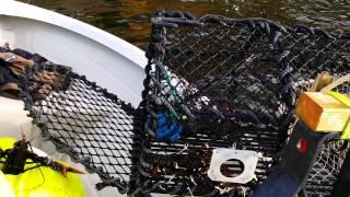 Hummerfiske 2014 midt fjords