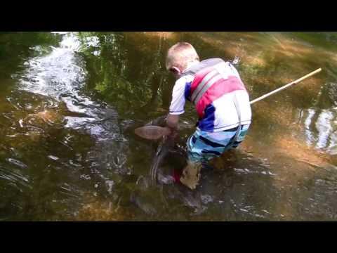 Catching Michigan Crawfish