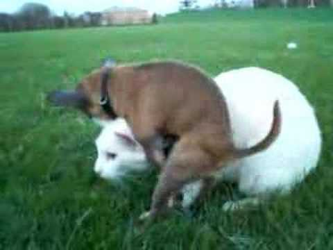When you Know Your to horny (Duke & White Cat)