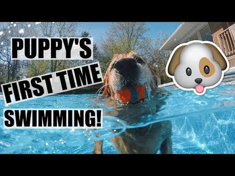 OUR PUPPY'S FIRST TIME SWIMMING!!