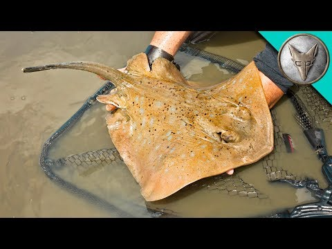 Crazy Stingray Catch!