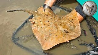Crazy Stingray Catch!