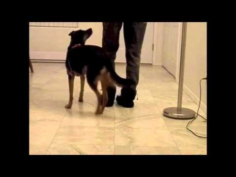 Lazy Leash Training  Level 2 Tests for Steps 1 to 5 (Sue Ailsby)
