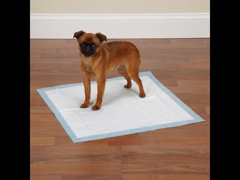 House break Dog : Why pee pads shouldn't be Used