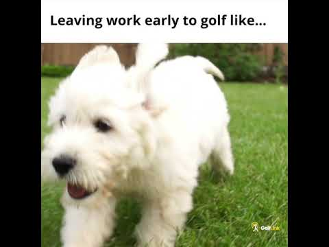 Leaving work early to golf like...