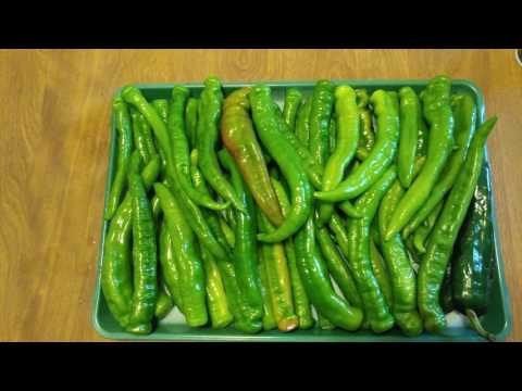 HOW TO OVEN ROAST 4 POUNDS of LONG HOT PEPPERS