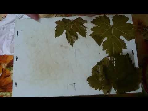 Palestinian stuffed grape leaves - waraq dawali