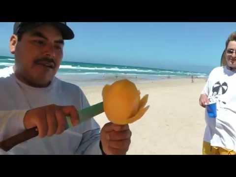 Mango flower on a stick Mexico Rocky Point beach