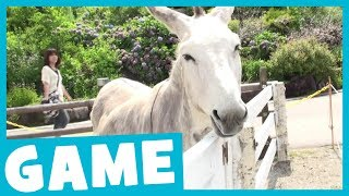 Learn Farm Animals | What's That Sound? Game for Kids | Maple Leaf Learning