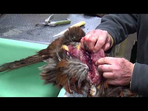 How to Clean Pheasant