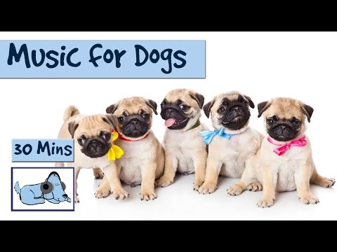 Music to Keep your Dog Happy and Calm! Relax Your Dog!