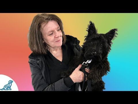 The Obedience Skill That Saved This Scottish Terrier