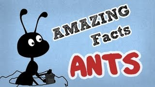 Amazing Facts About Ants   Cool Ant Facts   OMG Facts About Animals
