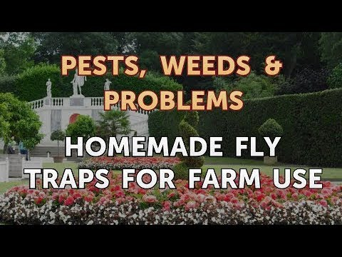 Homemade Fly Traps for Farm Use