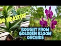 How much are my Orchids from Golden Bloom Orchids Farm.