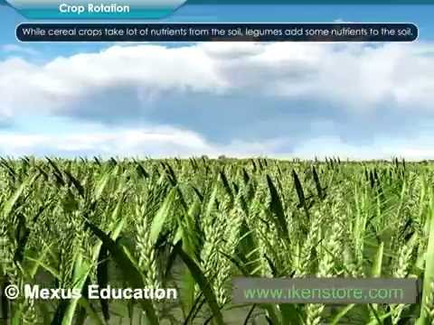 Easy Ways To Increase Food Production | Iken Edu