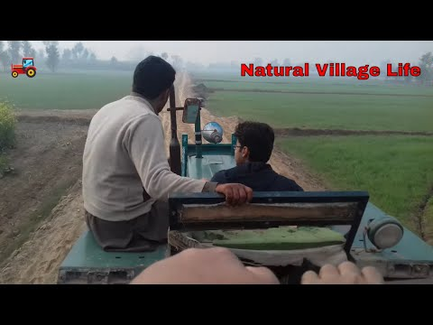 Village Life | Natural Beauty | Sohna Pind | Enjoyment with FIAT 640 Tractors