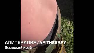 Download Апитерапия! Лечение пчёлами ! Apitherapy. Bee sting treatment. Народная медицина Video