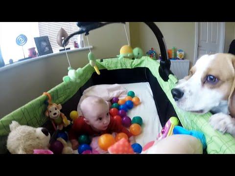 Charlie the Dog Decorates Baby Laura Crib With Plastic Balls
