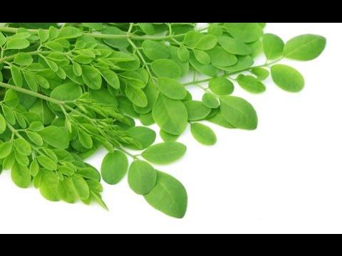 The Moringa Documentary - Moringa Oleifera Powder Benefits Explained
