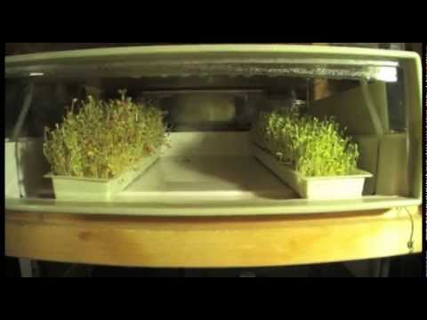 How to Sprout Seeds and Quickly Pay for an Easygreen Sprouter