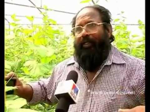 Organic Farm of Vijayan Pillai, Al Ain