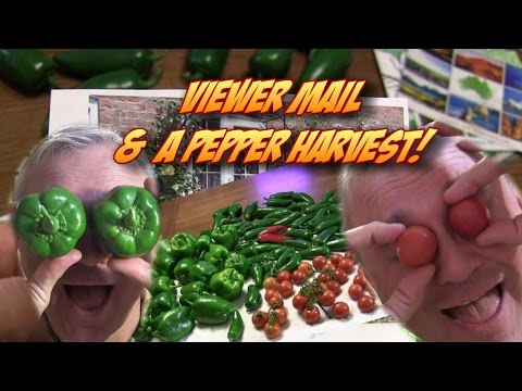 Prolific Pepper Harvest & Postcards from You!
