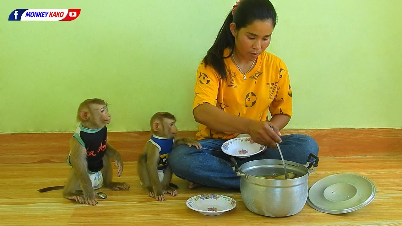 Baby Monkey   Obedient Kako And Luna Sit Waiting Eat Soup