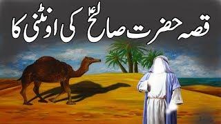 Hazrat Saleh AS Ki Ontni Ka Waqya | Story Of Prophet Saleh as Camel | Islamic Stories Urdu/Hindi
