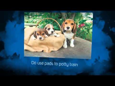 Pitbull Puppy Training Tips | Puppy Potty Training Tips | tips for potty training a puppy | Crate