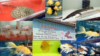 Betta Fish Pari Aquarium Kurla Fish Market
