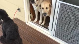 The Dogs React to the New Deck!!