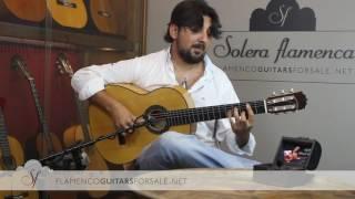 Antonio Rey in Solera Flamenca: