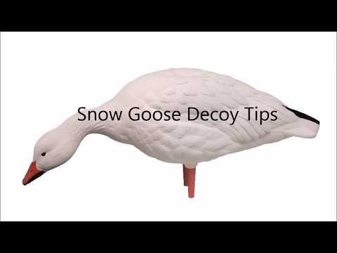 Snow Goose Decoy Tips - PakVim net HD Vdieos Portal