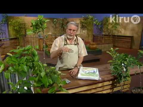 John citrus plants: Central Texas Gardener