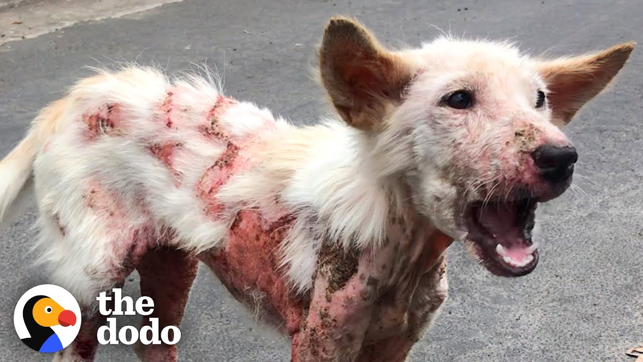 Sick Street Dog Can't Stop Wagging Her Tail | The Dodo