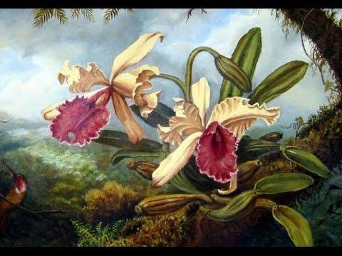 Orchid Hunter - Tom Hart Dyke