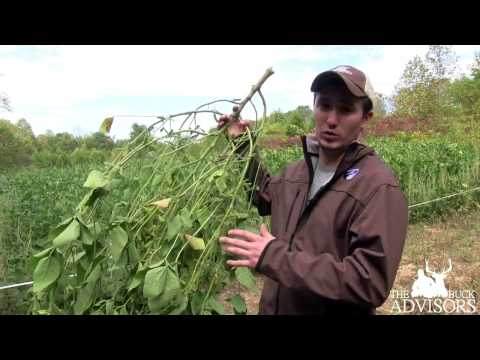 Dual Perimiter Food Plot Fence | Opening the Gate on a Food Plot Buffet for Deer