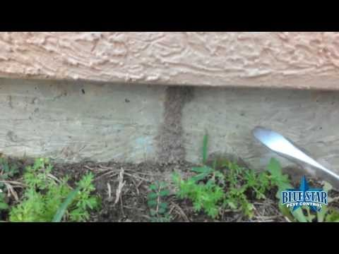 Conducive conditions with Termites getting into a home