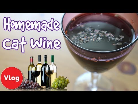 How to Make Cat Wine! Easy Recipe for Homemade Cat Wine! Make Your Own Purrrlot!