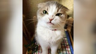 Best CORONA VACCINE is LAUGH - Funniest CATS EVER!