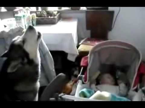 Dog Knows How To Make Baby Stop Crying