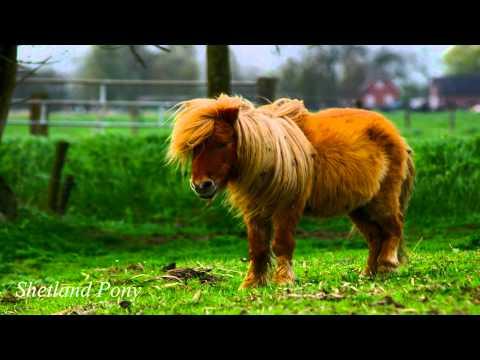 Native Scottish Animals