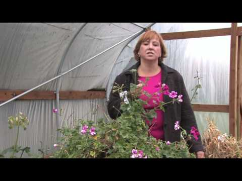 How to Grow Grass : How to Get Rid of Aphids