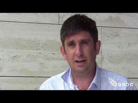 Andrew Fletcher, CSIRO, investigating break crop options compared with wheat | GRDC Updates| Western