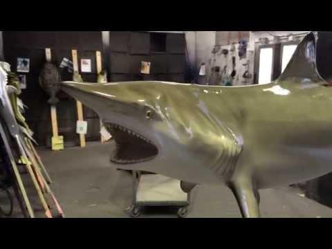 Blacktip shark 360° mount