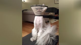 PETS at VET'S - Funniest REACTIONS of DOGS and CATS!