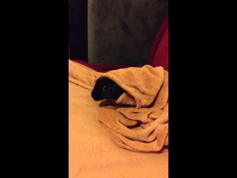 Mystery pet
