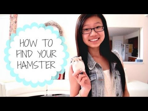 HOW TO FIND YOUR HAMSTER? | Irene Kung